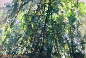 Sunny-Forest.jpg